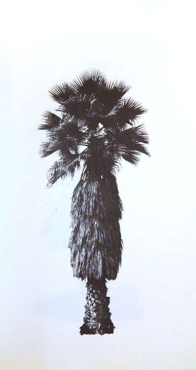 Image for A Few Palm Trees